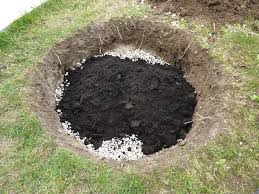 Planter un olivier en pleine terre o quand et comment for Planter un amaryllis en pleine terre