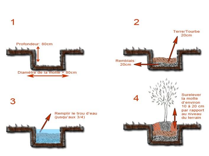 installation et plantation d 39 oliviers morbihan bretagne oliviers centenaires. Black Bedroom Furniture Sets. Home Design Ideas