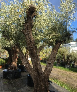 olivier farga