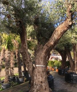 olivier farga trois branches