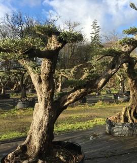 olivier plateau, nuage ou niwaki toulouse