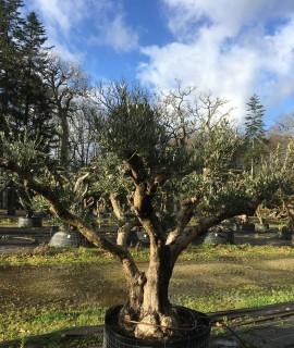 olivier multibranche
