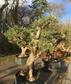 olivier 90 ans