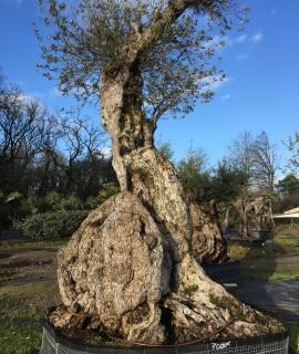 olivier d'exception