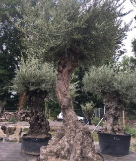 olivier Nanterre