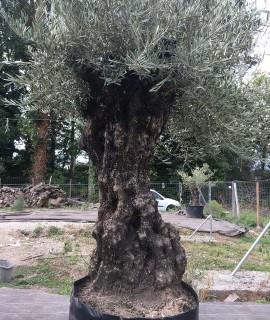 olivier Courbevoie