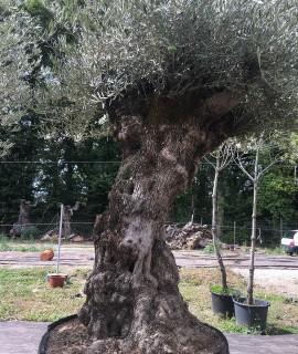 olivier Saint Denis