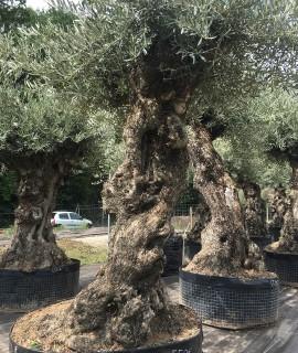 olivier région parisienne
