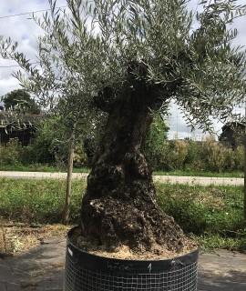 olivier versaille