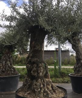 olivier Dourdan