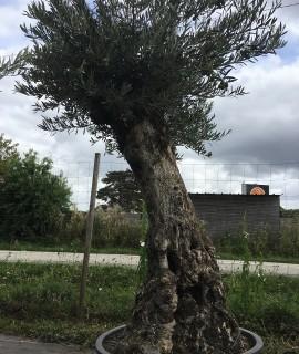 olivier Clamart