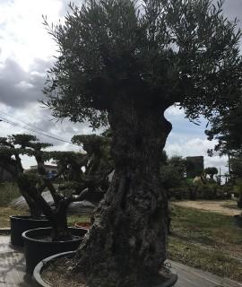 olivier pontivy