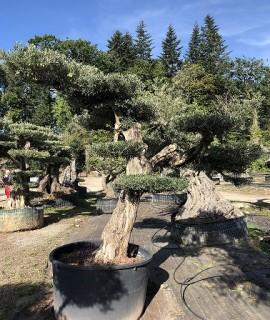 olivier farga 3