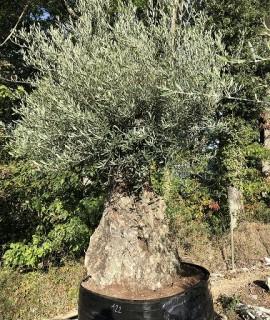 olivier Yveline