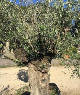 olivier R