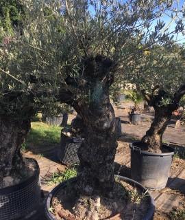 olivier W