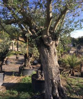 olivier y vendu