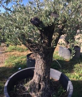 olivier  vendu