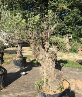 olivier I2