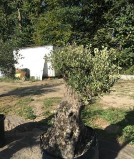 olivier L 2