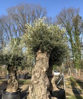 olivier deco