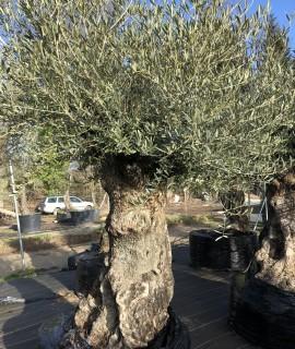 olivier  La Baule