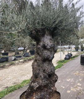 olivier Zinesi