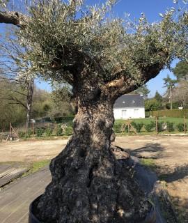 olivier sevillan