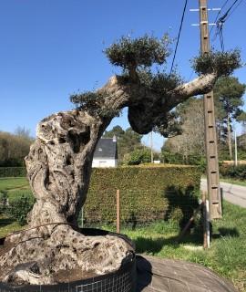 olivier d'exception plateau paris
