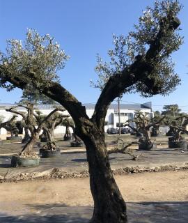 olivier farga centenaire