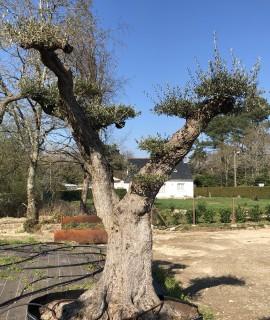 olivier nuage
