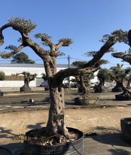olivier farga plateau