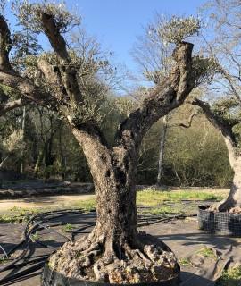 olivier niwaki Rennes