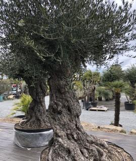 olivier  loire atlantique nantes