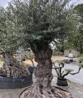 olivier vendée