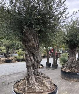 olivier Touraine