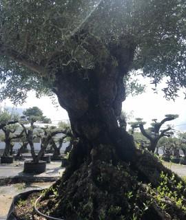 olivier lechin belle charpentière