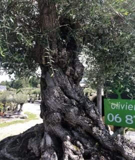olivier rennes splendide