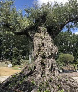 olivier loire- atlantique