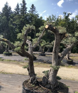 olivier larmor-plage 56