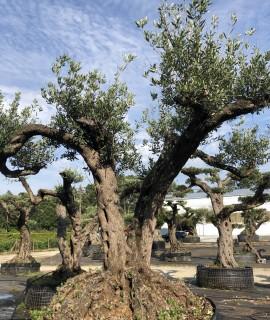 olivier faga bi-centenire