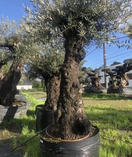 olivier pas cher