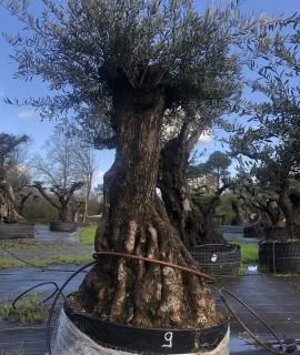 olivier morbihan 0009