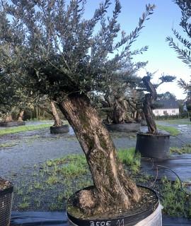 olivier la baule 0012
