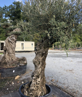 olivier 206